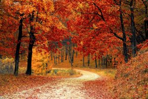 Forest path in the fall.