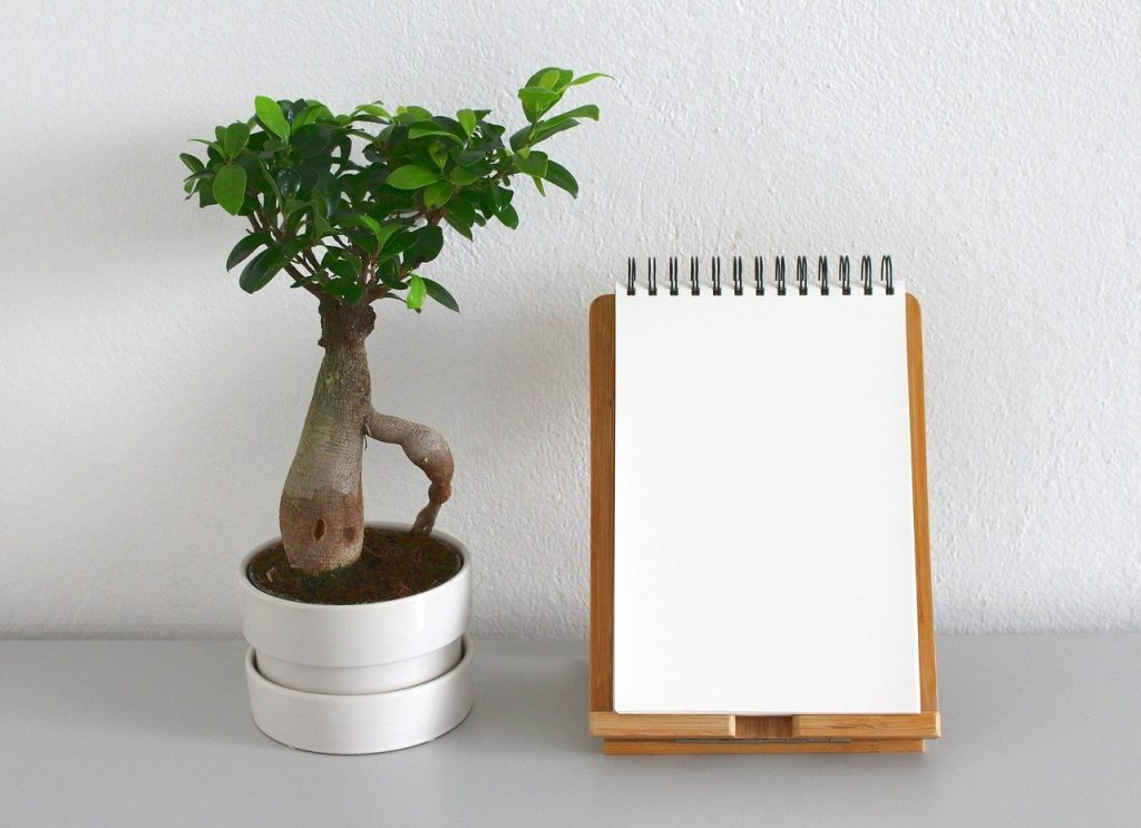 A plant next to a note pad.